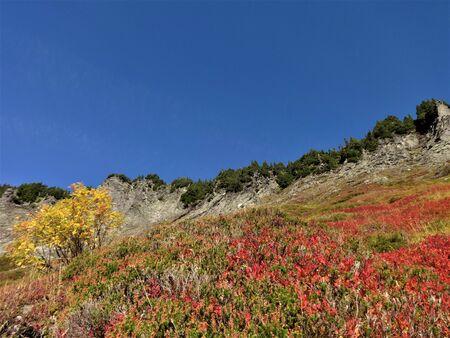 mountain ash: Autumn colored wild blueberries and a mountain ash on the slope of a mountain Stock Photo