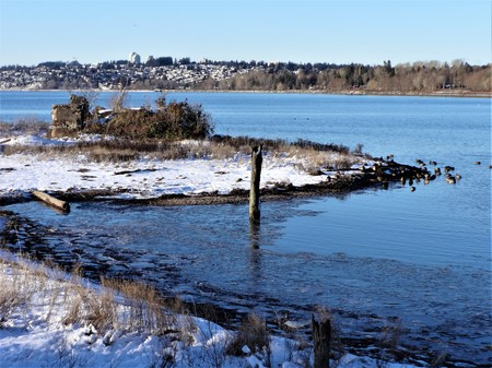 Over looking city of White Rock beyond Semiahmoo Bay with some wild ducks staying from the cold weather Stock Photo