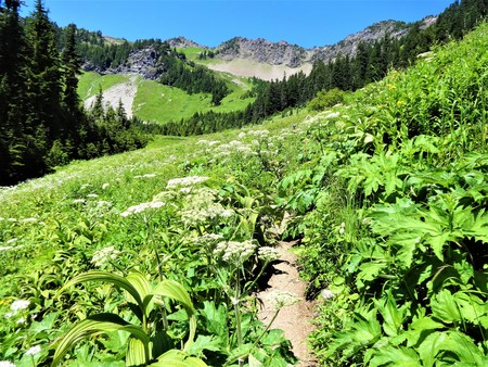 Wildflowers bloom along a sunny trail at Church mountain, Washington