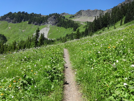 A sunny sloped meadow with wildflowers along the trail, leads to a Church Mountain viewpoint