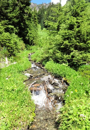 A small stream flows in a mountain meadow