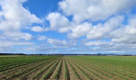 northwest: Early season tulip fields and the horizon