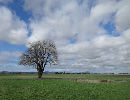 A lone tree in the early spring field