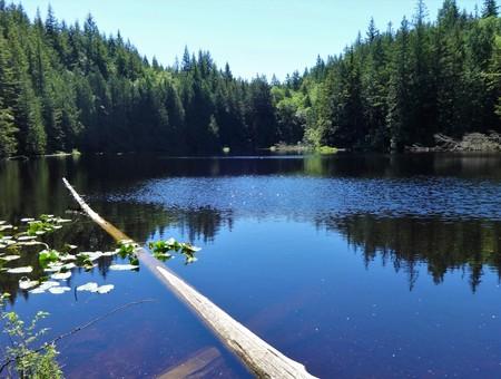 Tranquil Cedar Lake surrounded by fresh green in June on Chuckanut mountain near Bellingham, Washington