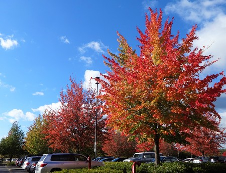 Colorful foliage in a parking lot