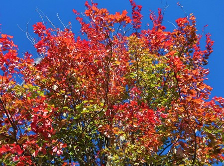 Symphony of colors in the fall