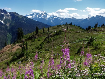 A panoramic view of Mount Shuksan from a meadow full of blooming wildflowers in the North Cascade mountain
