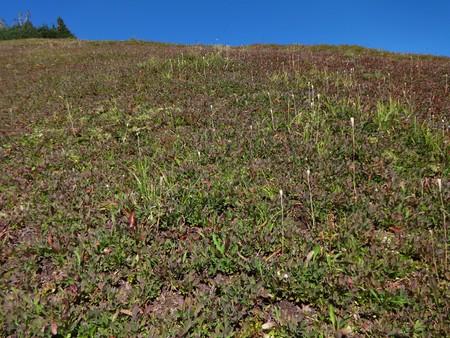 Summer is over - an alpine grass field