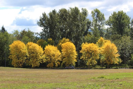 A panoramic view of fall colors on a scenic parkway 版權商用圖片