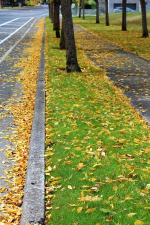 A paved walkway along a boulevard with fall color leaves on the ground 版權商用圖片