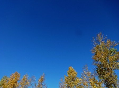 Breeze through fall colored forest with blue sky