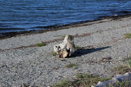 A tide washed log on a beach