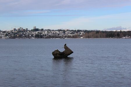 Bald eagle on a big rock in Semiahmoo Bay with a view of White Rock City, Canada in winter