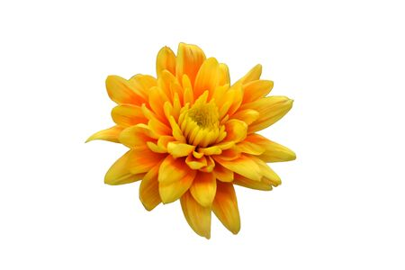 Yellow flower cut out