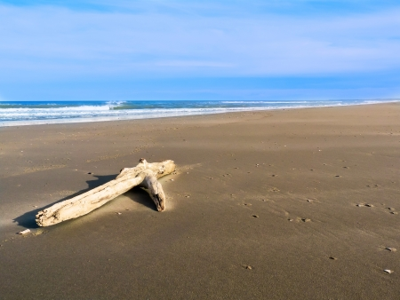 Driftwood sulla spiaggia