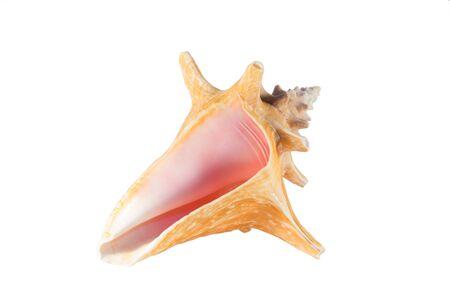 Shell tagliato