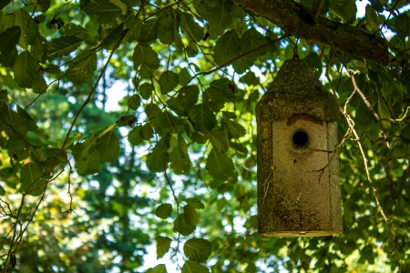 Nestbox in a tree