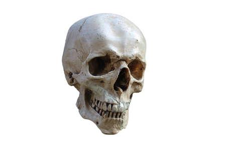 Skull tagliato Archivio Fotografico