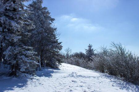 Foresta in neve Archivio Fotografico