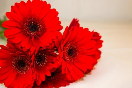 Un bouquet di gerbere rosse Archivio Fotografico