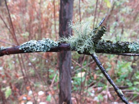 Autumn forest and branch with lichen