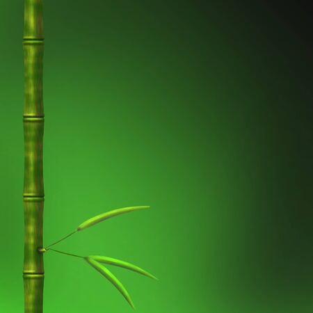 Branch of a bamboo with leaves on a green background