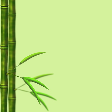 Branch of a bamboo with leaves on a green background photo