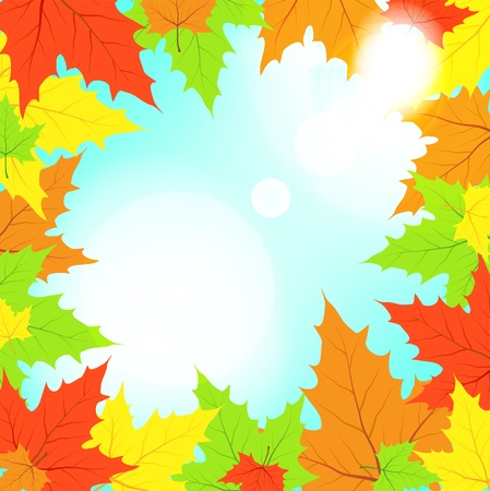 Multi-colored maple leaves in the light of sun patches of light Vector