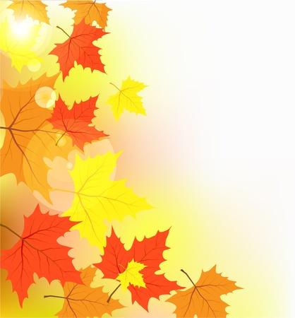 hojas de maple: Arce multicolor deja a la luz de los parches de sun de luz Vectores