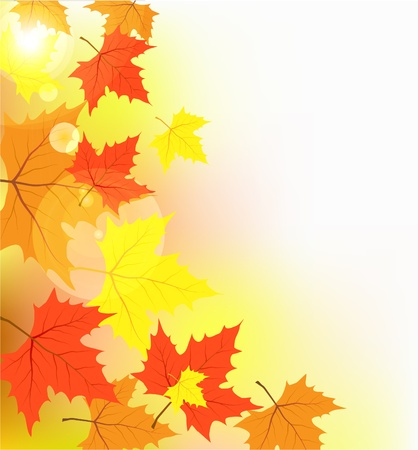 seasonal symbol: Multi-colored maple leaves in the light of sun patches of light
