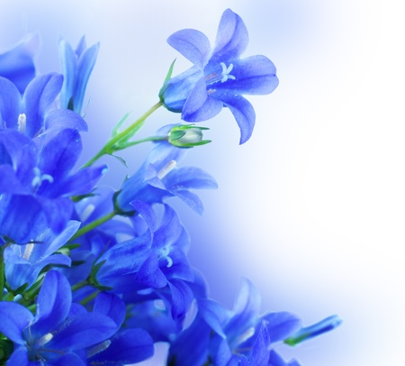 Flowers on a white background, dark blue hand bells photo