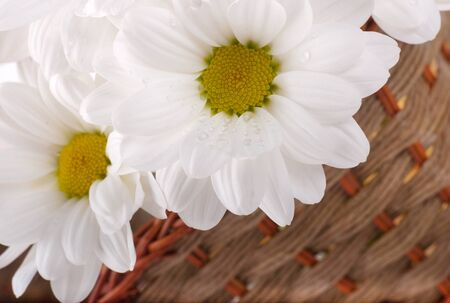 White flowers, field camomiles in a braided basket photo