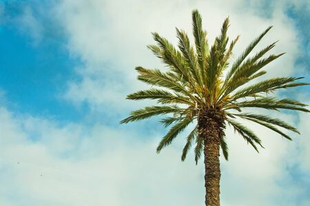 palate: Date palm tree against a blue palate with clouds