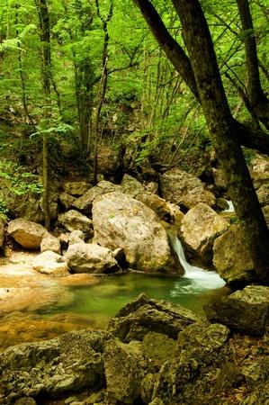 ravine: Mountain River in the morning sun, summer day