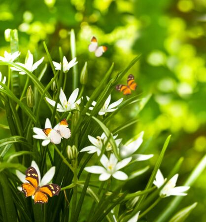 White flowers and the green grass, flying butterfly photo