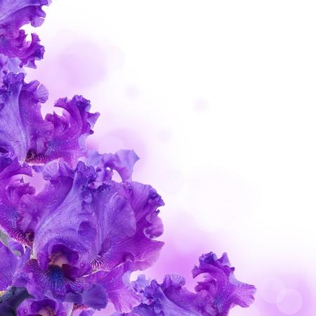iris flower: Blue irises against a green grass, a summer butterfly