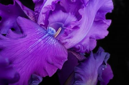 Blue irises against a green grass, a summer butterfly photo