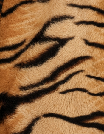 Structure of a skin of a tiger, striped background photo