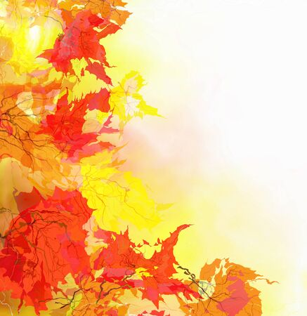 Multi-colored maple leaves in the light of sun patches of light Stock Photo - 15069140