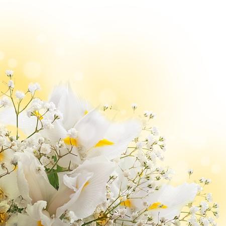 White irises against a green grass, a summer butterfly  Stok Fotoğraf