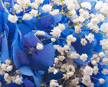 Flowers in a bouquet blue hydrangeas and white flowers stock photo flowers in a bouquet blue hydrangeas and white flowers stock photo 15552829 mightylinksfo