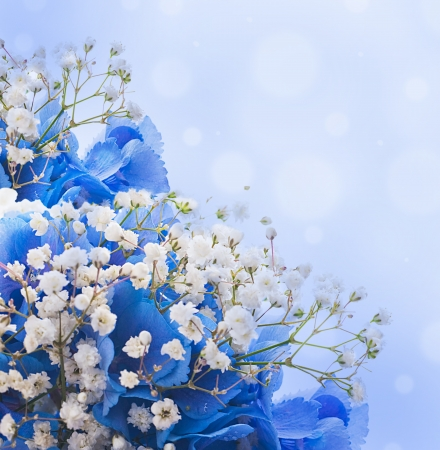 Flowers in a bouquet blue hydrangeas and white flowers stock photo flowers in a bouquet blue hydrangeas and white flowers stock photo 15553296 mightylinksfo
