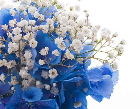 Flowers in a bouquet blue hydrangeas and white flowers stock photo flowers in a bouquet blue hydrangeas and white flowers stock photo 15553291 mightylinksfo