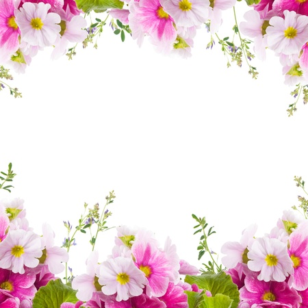 A spring primrose is in a bouquet, floral background photo