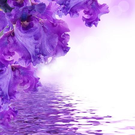 flor violeta: Iris azul sobre un césped verde, una mariposa verano