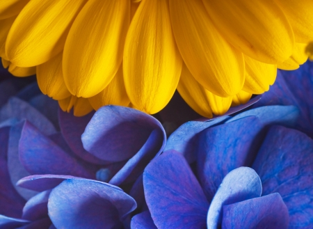 blue flowers: Bouquet from blue hydrangeas and yellow asters, a flower background Stock Photo
