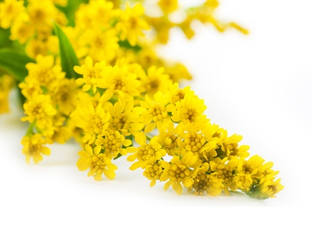 Bouquet from yellow asters, a flower background photo