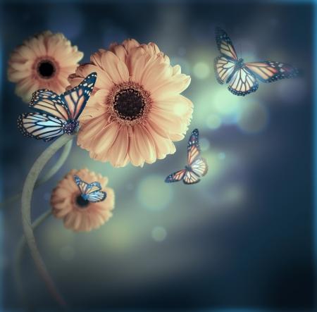crisantemos: Floral de fondo, gerbery en los rayos de la luz y de la mariposa