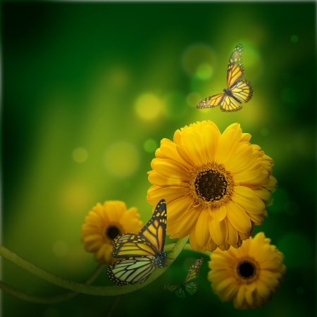 Floral background, gerbery in the rays of light and butterfly photo