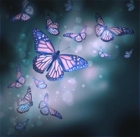 mariposas volando: Vuelo de mariposas está en los rayos de la luz Foto de archivo